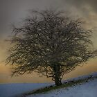 Winter Tree  by Glen Allen