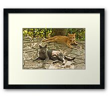Alys and Tigre in tuscany Framed Print