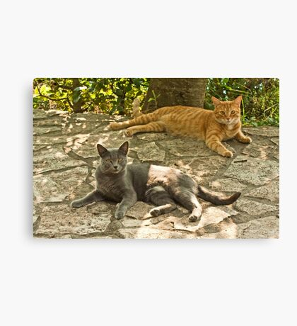 Alys and Tigre in tuscany Canvas Print