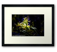 ILLUMINATED DAINTY FLOWERS Framed Print
