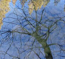 Tree and Sky Reflections by KristinaL