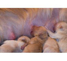 Survival Of The Fittest(Daisy's Puppies) Photographic Print