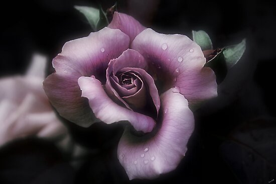 Dusty Rose by Elaine  Manley