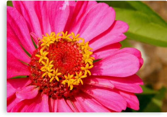 Pretty Pink Pick    ^ by ctheworld