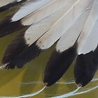 Eagle Feathers by Kenneth Hoffman