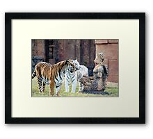 Lions with Statue Framed Print