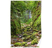 Galbena river in Apuseni mountains Poster