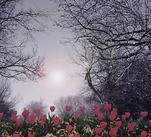 TULIPS GROW by Paul Quixote Alleyne