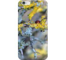 Tree Lichen........... iPhone Case/Skin