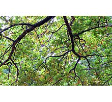 UNDER THE OAK TREE Photographic Print