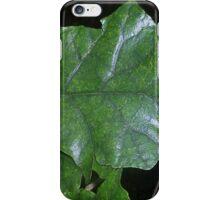 Brachyglottis repanda (Rangiora) iPhone Case/Skin