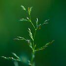 Tiny Tree.  by Sherstin Schwartz