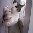 Reach by PhotoFox