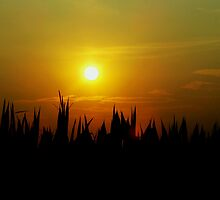 Sun sets behind the cornfield by Judi Taylor