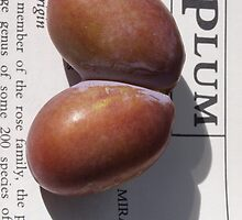 Plum by Tom McDonnell