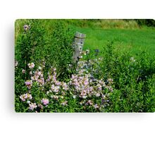 Meadow Flowers: Bouncing Bet Canvas Print