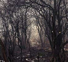 Enchanted Forest by AbigailJoy