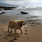 A Dog's Life by Maureen  Geraghty
