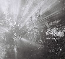 Rays by Lachlan Kent