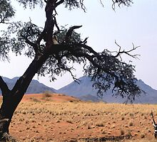 Oryx hiding fro the midday sun by Wild at Heart Namibia