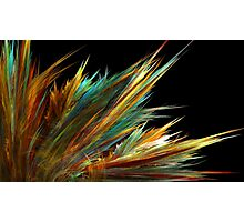 Summer Grass Photographic Print