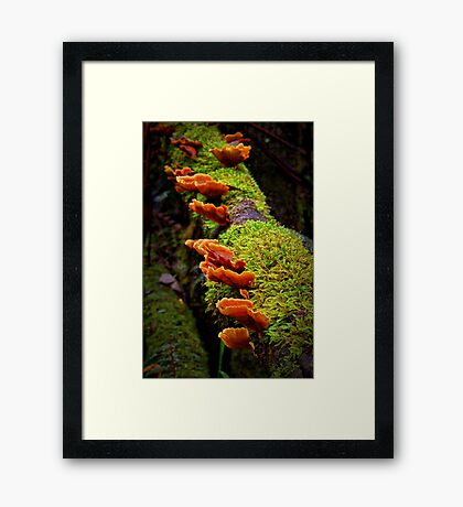 """A Hidden Treasure"" Framed Print"