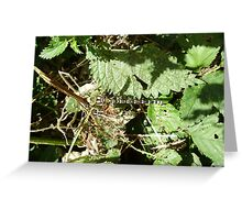 SOUTHERN HAWKER DRAGONFLY(AESHNA CYANEA) Greeting Card