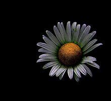 Alone ! by Elfriede Fulda