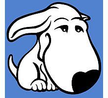 Soppy Bull Terrier White Coat Photographic Print