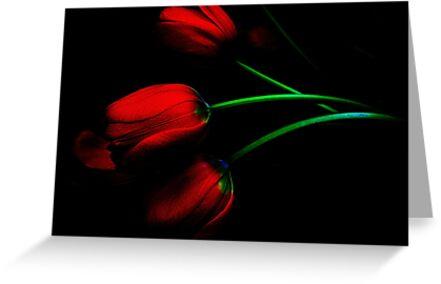 Romance ! by Elfriede Fulda