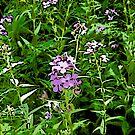 Purple Wildflowers by steelwidow
