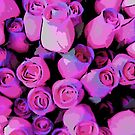 Hot Pink Roses by steelwidow