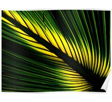 Lighted Palm Poster