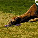 Camel in the grass by steelwidow