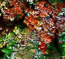 Cross Lichen by Kenart