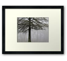 Forest Fog Framed Print