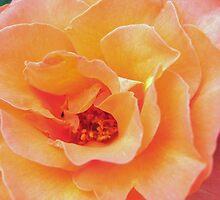 Soft Gold by HELUA