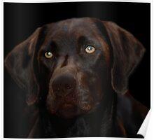 Dog-gone!!  Poster