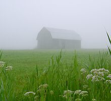 Fog In The Fields #3 by marchello