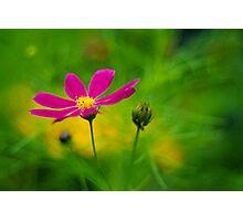 Enchanted Garden Photographic Print
