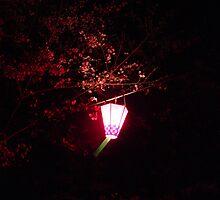 Sakura at Night by Lauren Glover