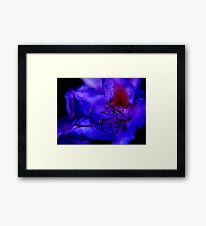 midnight blue ... Framed Print
