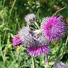 """""""Purple Thistles"""" by Lynn Bawden"""