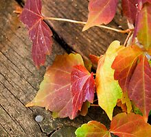 Autumn Creeper 3 by michaelshelley