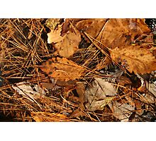 Autumn Canvas Photographic Print