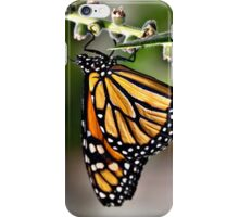 Monarch butterfly iPhone Case/Skin