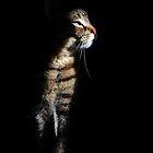 Sliver Of sunlight by jodi payne