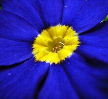 a bit blue by Floralynne