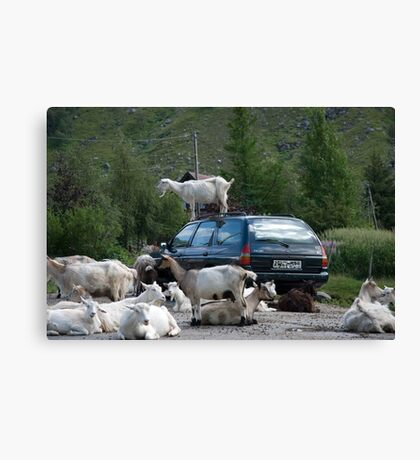 A goat on the roof Canvas Print