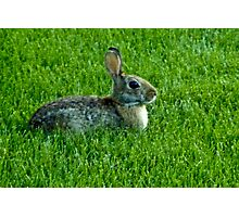 Our Backyard Bunny Photographic Print